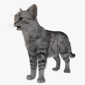 3d model cat 3 fur