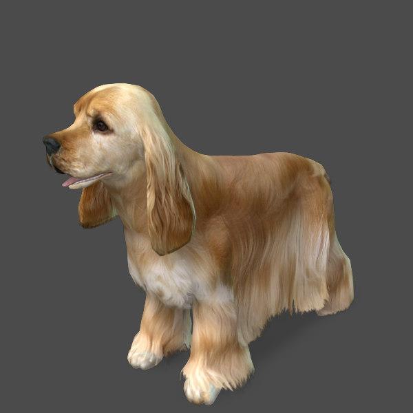 model s dog cocker spaniel