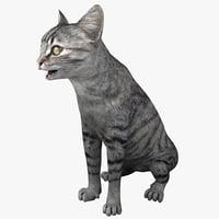3d cat 3 pose