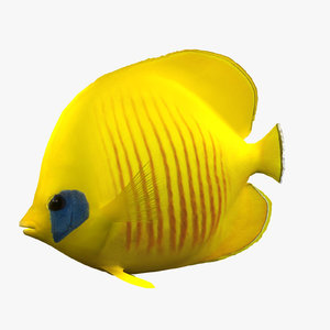 3dsmax bluecheek butterfly fish