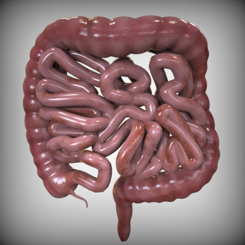3ds intestine