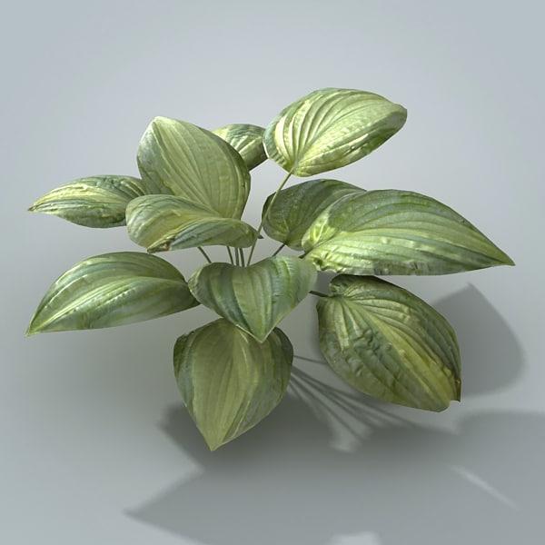 3dsmax hosta plant