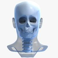 3d model skull head