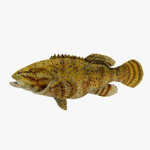 max goliath grouper