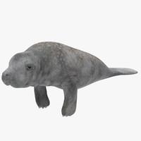 3d model manatees
