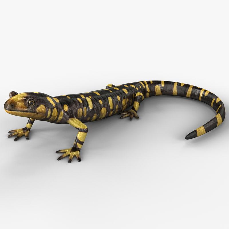 3d tiger salamander pose 1 model