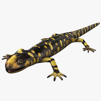 3d tiger salamander model