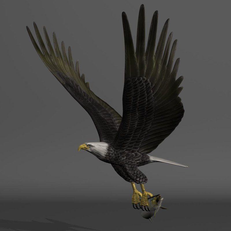 3d bald eagle salmon