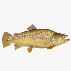 max brown trout