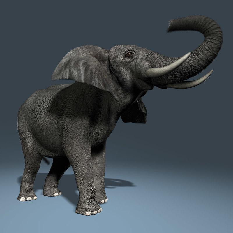photorealistic african elephant animation ma