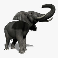 photorealistic african elephant animation ma