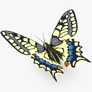 3d butterfly papilio machaon