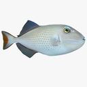 Triggerfish 3D models