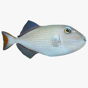 sargassum triggerfish 3d model