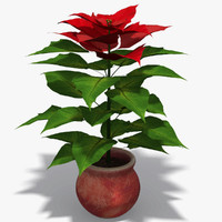 plant poinsettia 3d model