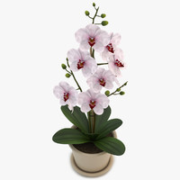 orchid white 3d model