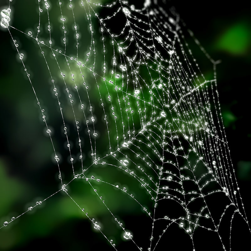 3d modeled cobweb model