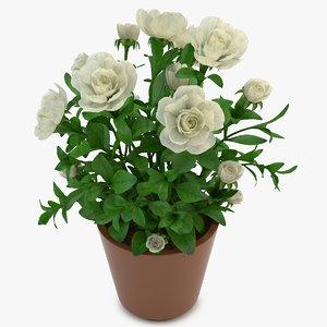 3d gardenia white model