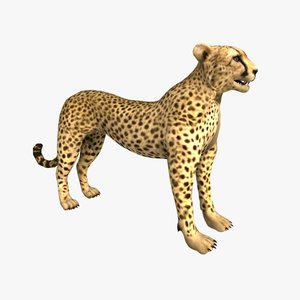 max cheetah rigged