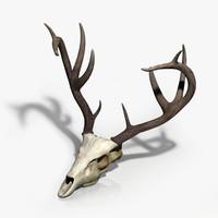 3d model deer skull
