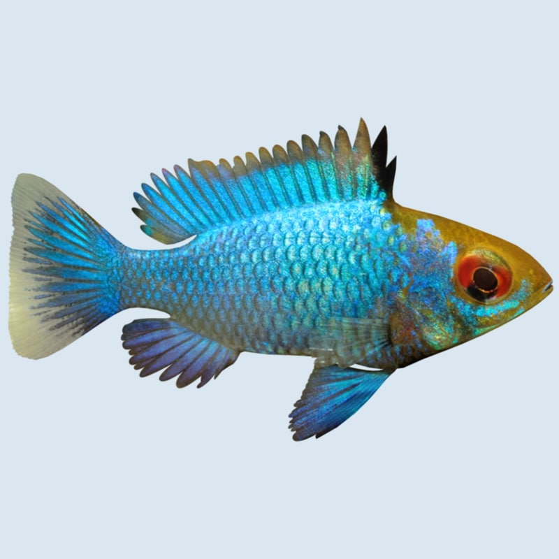 3d 3ds blue ram