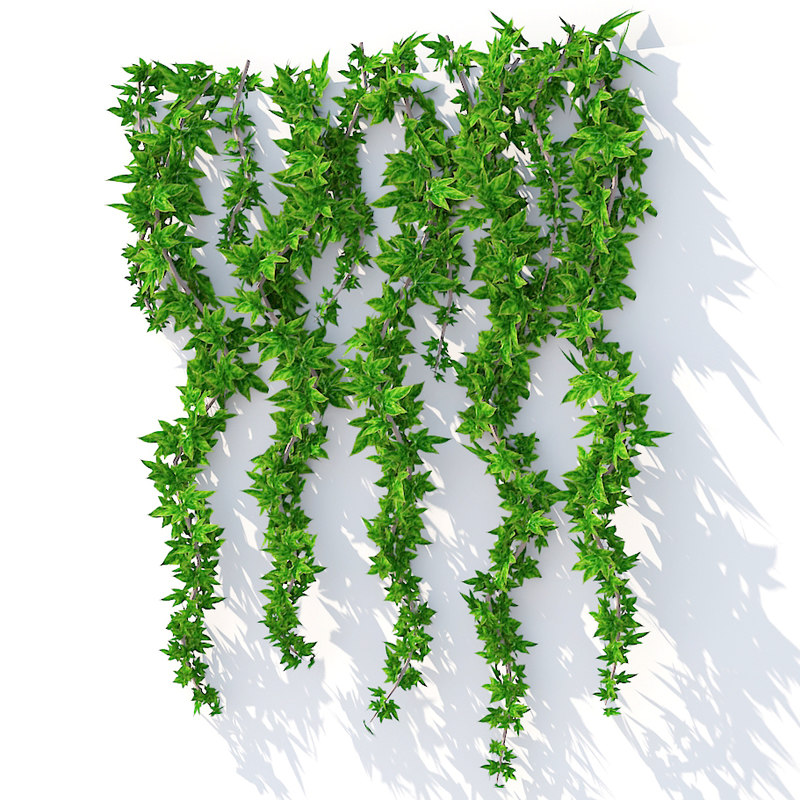 Wall Hanging Plant