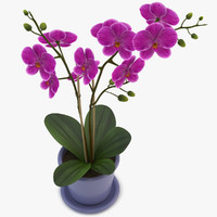 max orchid violet
