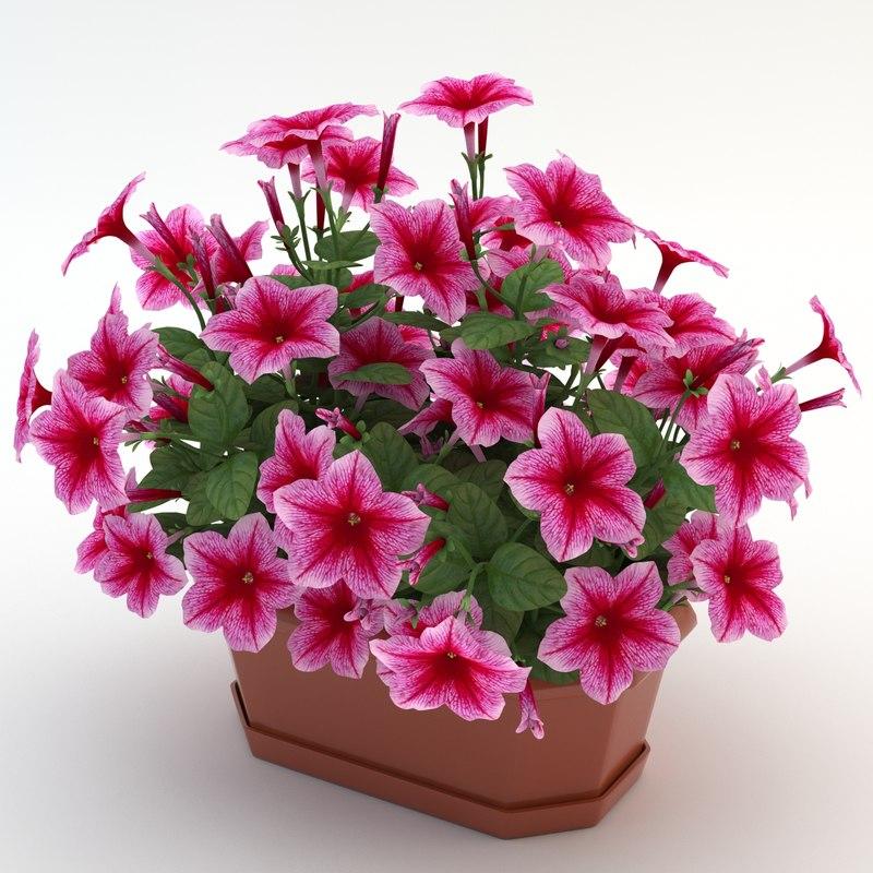 petunia pink obj