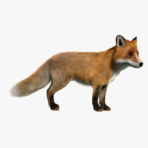 3d red fox rigged model