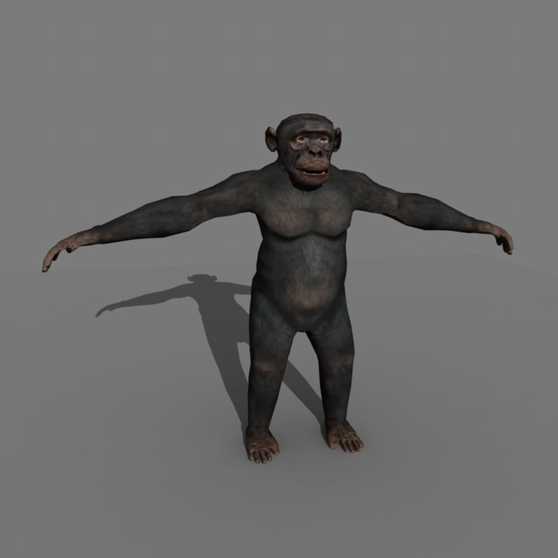 3d realistic rigged