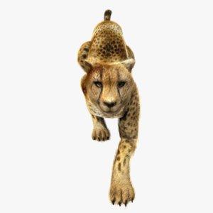 ma cheetah animation fur