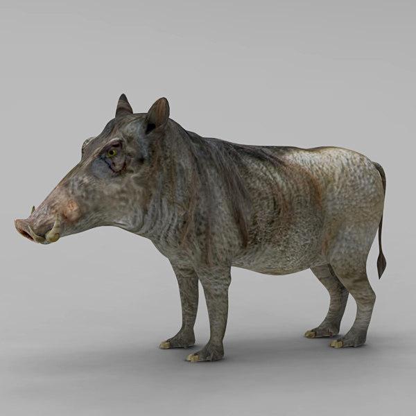 3d pig hylochoerus