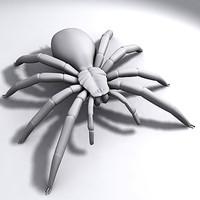 max bird spider tarantula