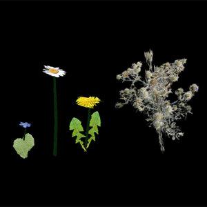 3dsmax flowers