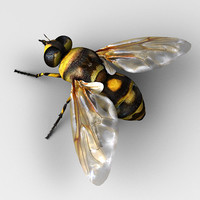 3ds max fly