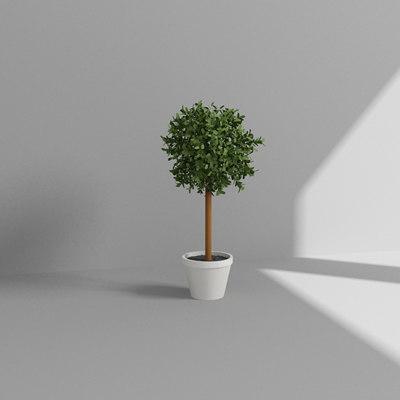 3d model topiary plant