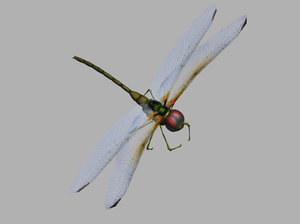 3d model dragonfly