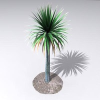 cordyline australis palm 3ds