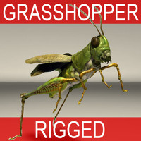 GRASSHOPER RIGGED
