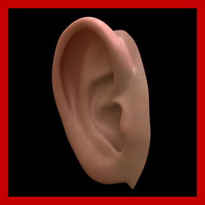 ear body 3d model