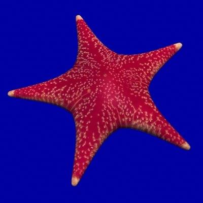 starfish fish lwo