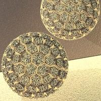 maya pollen spore