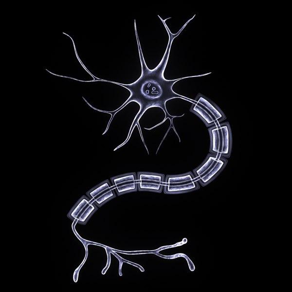 3d nerves neurons