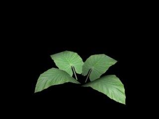 3d max jungle plant