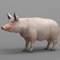 3d pig