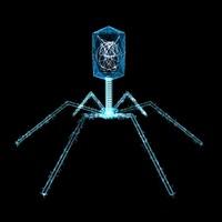 bacteriophage virus max