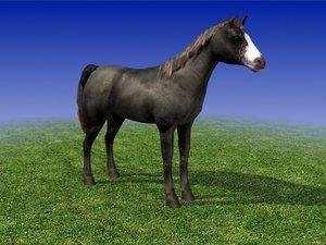 3d horse black model