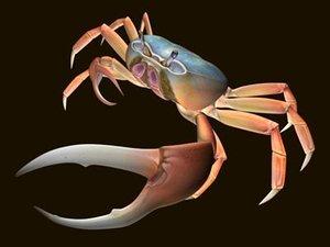 3d model blue land crab