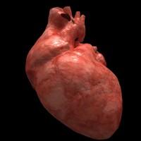 heart.c4d
