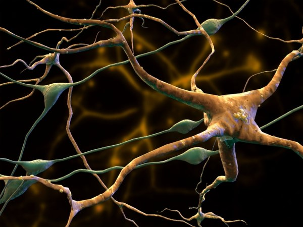 3d model neurons glial cells